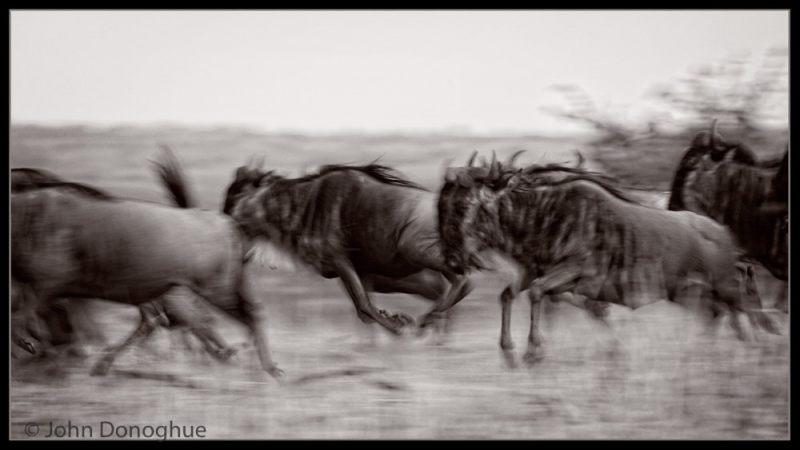 2130593_Nature_Running_Wild_165386_John-Donoghue