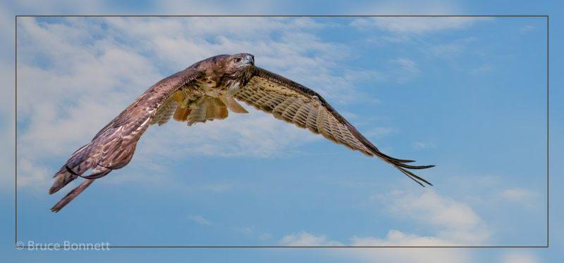 1130452_Master_Nature_Eyes_in_the_Sky_121012_Bruce-Bonnett