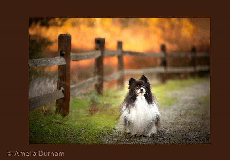 2160613_Portrait_A_Warm_Welcome_121031_Amelia-Durham