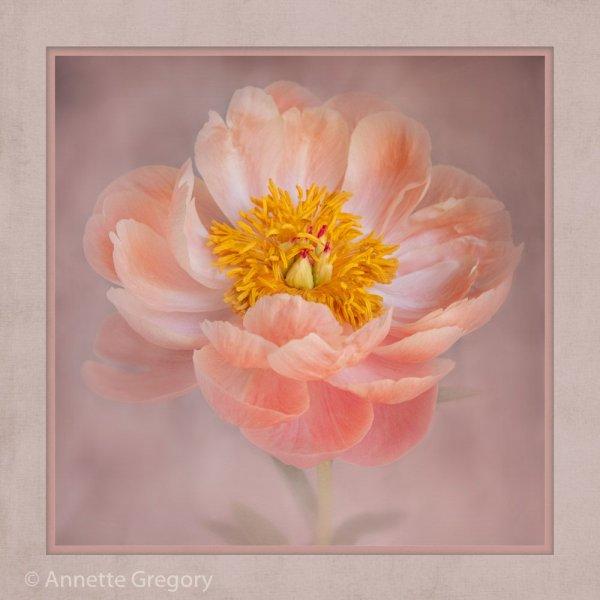 2110534_Illustrative_Pretty_in_Pink_165367_Annette-Gregory